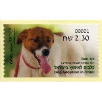 2016.03. Dog Adoption in Israel (3) - Bob - Central Israel
