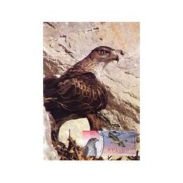 ISRAEL (2009). Águila perdicera - 001. Tarjeta máxima