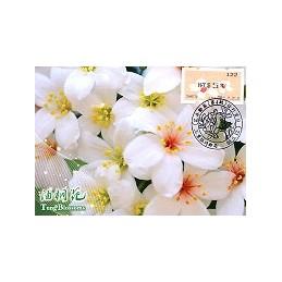 TAIWÁN (2010). Flores Tung (4)- negro. Tarjeta máxima (122)