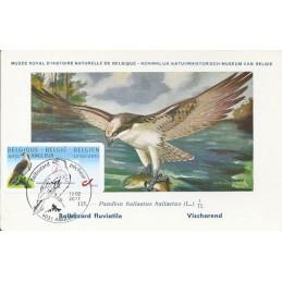 BÉLGICA (2011). Aguila pescadora - Angleur. Tarjeta máxima