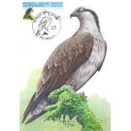 BÉLGICA (2011). Aguila pescadora - Angleur. Tarjeta máxima firma