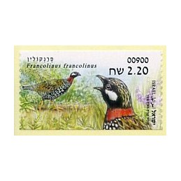 ISRAEL (2015). Francolinus...