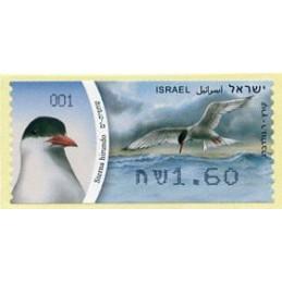 ISRAEL (2010). Common tern...