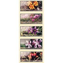 CHIPRE (2002) Flora salvaje. Etiquetas nuevas en blanco