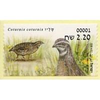 2015.07. Coturnix coturnix (Common quail)