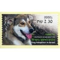 2016.05. Dog Adoption in Israel (5) - Teddy - Northern Israel