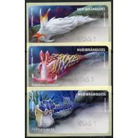 2019. Nudibrânquios (Nudibranchs)