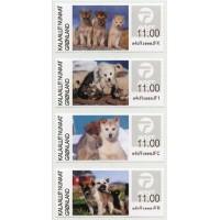 2020. Cachorros de perro de trineo de Groenlandia
