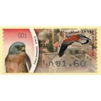 2009. Falco naumanni (Lesser Kestrel)