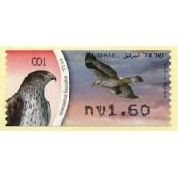 2009. Hieraetus fasciatus (Bonelli's Eagle)