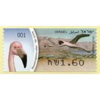 2010. Phoenicopterus ruber (American flamingo)